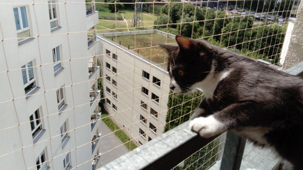 Zestaw Siatka Na Balkon 3 M X 2 M